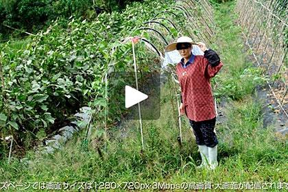 【1/2】世間知らずのド田舎の農家のばばあ 桐村夏子