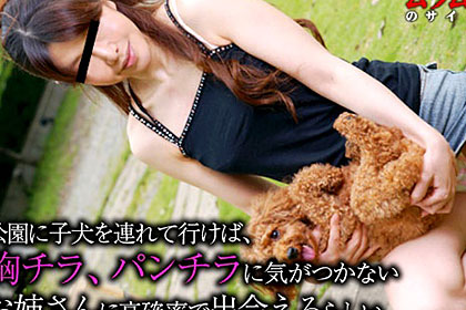 公園に子犬を連れて行けば「きゃーかわいい」っと、犬に夢中になってパンチラに気がつかないお姉さんに高確率で出会えるらしい